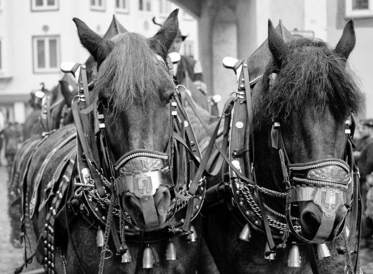 Wallfahrt, November, Pferde, Tradition